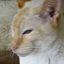 worfcat